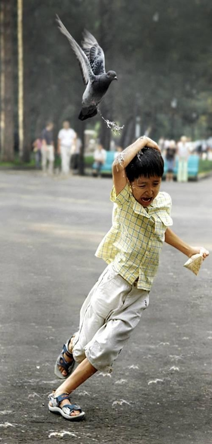 http://www.reallyfunnypictures.co.uk/kids/pics/23.02.06/divebomber.jpg